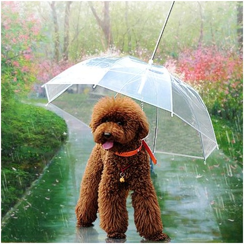 2 Transparent Umbrella