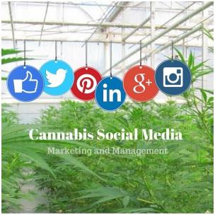 3 Organic Cannabis SEO